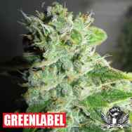 Green Label Seeds Frosty Kush